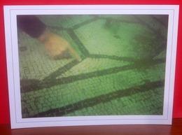 SUB Mosaico Sommerso Baia CAMPI FLEGREI - Foto Libero De Cunzo CARTOLINA Non Viaggiata - Otros