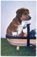 DOG : PUPPY IN TRUG BASKET - Dogs