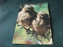 UCCELLI BIRD BRANO DI A. MANZONI - Uccelli