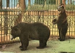LYON......parc De La Tete D Or.. Les Ours - Bären