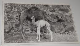 CARTE POSTALE ANCIEN DE MAROC - SIDI IFNI - Marokko