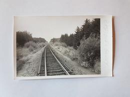 41530 -  Chemin De Fer  -  Ligne  Bastogne  Gouvy Photo Format Carte - Bastogne