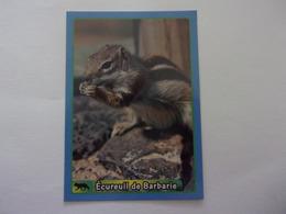 PANINI ANIMAL WORLD Animaux N°420 écureuil De Barbarie Barbary Ground Squirrel Ardilla Eichhörnchen - Französische Ausgabe