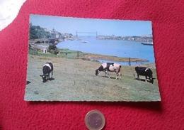 POSTAL POST CARD CARTE POSTALE SPAIN Sestao Vizcaya Euskadi Dársena Y Puente De Vizcaya VACAS VACHE COW VACA VACHES COWS - Vacas