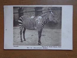 Zebra / Zoo Of London, The Mountain Zebra -> Unwritten - Zebras