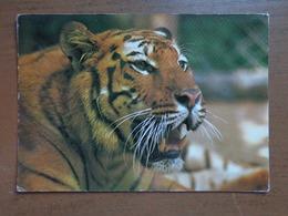 Dierenpark Wassenaar (Nederland) Tijger -> Beschreven - Tigres