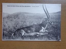 Mission Du Shiré Des Pères Montfortains, Antilope Ingala (unwritten) - Autres