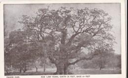 AN45 Major Oak, Age 1500 Years - Trees