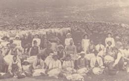 AN45 Social History - Farming, Sheep Shearing - Reproduction - Farmers