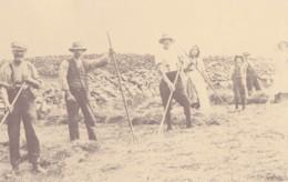 AN45 Social History - Farming, Haymaking - Reproduction - Farmers