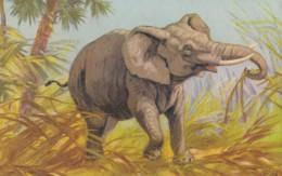 AS89 Animals - Elephant - Artist Signed E.B. - Elephants