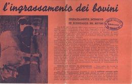 """5114 """"L'INGRASSAMENTO DEI BOVINI-STAMPA DI PROPAGANDA DELLE FABBR. RIUN. AMIDO-GLUCOSIO-DESTRINA """"- OPUSCOLO ORIG. '30 - Italy"""