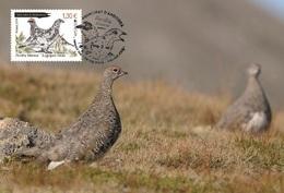 French Andorra 2019 - Europa C.E.P.T. Birds Maximum Card - Andorra Francesa