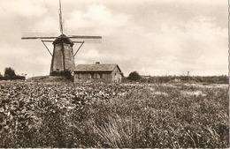 LES MOËRES  --  Le Moulin à Eau (1865) - Le Danube Service De Désèchement - Hondshoote
