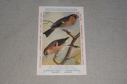 Publicité Antigrippine Midy Piperazine Oiseau N° 345 Chardonneret élégant Bouvreuil Pivoine - Publicité