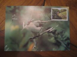LISBOA 1986 Açores Europa Priolo Bird Pyrrhula Murina Maxi Maximum Card PORTUGAL - 1910-... République