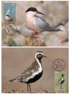 Ireland/Eire 2019 - Europa C.E.P.T. Birds Maximum Card Set - 1949-... República Irlandése