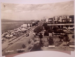 FOLLONICA Panorama Auto Animata Giardino Florida  VIAGGIATA 1961 - Viterbo