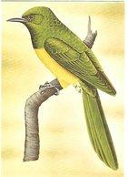 Sao Tomé E Principe - Postal Stationary , Entier - Mint - 1999 -    African Emerald Cuckoo    Chrysococcyx Cupreus - Cuckoos & Turacos