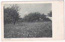 Frühlings Blumenkleid (Hainbuch) - K. Pribek - (Verlag T,-V. 'Die Naturfreunde', Serie K - Wien) - Oostenrijk