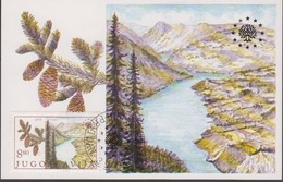 Yugoslavia 1982 European Nature 1v National Park Tara Maxicard (44518) - Europese Gedachte