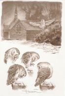BUZIN.. CHOUETTE EFFRAIE - 1985-.. Birds (Buzin)