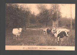 Rochefort - La Lomme, Paysage D'été - Vache / Cow / Kuh / Koe - Rochefort