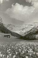 2019 - LIECHTENSTEIN - CPSM PF NB 1939 - VADUZ  - STEG - Crocus à 4000 Ft - Liechtenstein