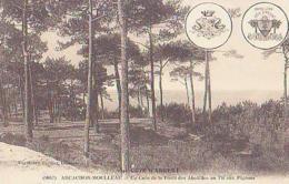 Gironde        1125        Le Moulleau.Un Coin De La Forêt Des Abatilles Au Tir Aux Pigeons - Autres Communes
