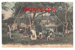 CPA - La Cueillette Des Pommes En 1918 - Scènes Normandes - N° 1180 - Coll. E. Pasquis à Laigle ( Orne ) - Cultivation