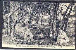 NICE - La Cueillette Des Olives - Old Monk Olive Oil Cy - Nice - Old Professions