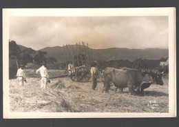 Tenerife - Una Hera - Pila De Heno / Haystack / Hooistapel - Runderen / Ganado / Cow / Vache - Photo Card - Tenerife