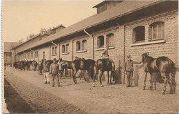 Brasschaat   * Brasschaet - Polygone  - Artillerieschool - Opschik Der Paarden - Toilette Des Chevaux - Brasschaat