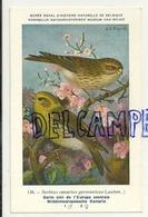 Oiseau. Bird.  Serin  Cini De L'Europe CentraleHub. Dupond. Musée Royal D'Histoire Naturelle De Belgique - Oiseaux