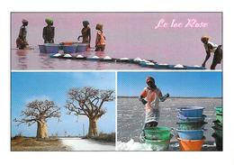 Afrique >  SENEGAL Le  Lac Rose (Ramassage Du Sel Par Les Femmes)(arbres Trees) (Photo Maurice ASCANI 82)  *PRIX FIXE - Senegal