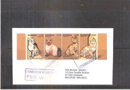 Chats - Lettre Du Nicaragua Vers La Belgique -   (à Voir) - Hauskatzen