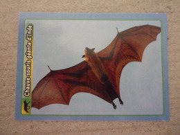 PANINI ANIMAL WORLD Animaux N°77 Chauve-souris Géante D'Inde Indian Flying Fox - Panini