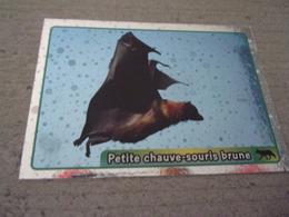 PANINI ANIMAL WORLD Animaux N°61 Petite Chauve-souris Brune Little Brown Bat - Panini
