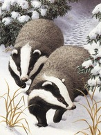 Badgers In Winter Landscape - From A Painting By Sarah Adams - Animals