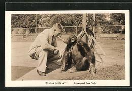 AK Liverpool, Zoo Park, Affe An Einer Kette Mit Seinem Tierpfleger, Mickey Lights Up - Monkeys