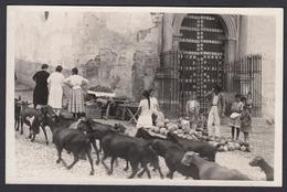 CPA - Espana / Spain -  GRANADA, Cabras En Placeta De San Gregorio, Fotografica - Granada