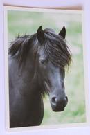 Chevaux Cheval   Cpsm    Cheval De Merens - Pferde