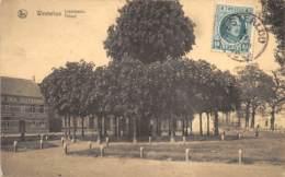 Westerloo - Tilleul - Westerlo
