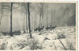 Elsenborn - Chasse à Elsenborn - Jacht Te Elsenborn - Edit. Maison Kanzler, Elsenborn-Camp - Elsenborn (camp)