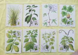 SAO TOME ET PRINCIPE Medecine, Plantes Medicinales. FDC Carte Maximums 1 Er Jour. 1983 Serie Complete - Medizin
