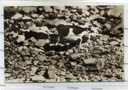 Shetland Postcard JD Rattar 1930s Oyster Catcher Used During War With Censor Marks FPO No.67 - Shetland