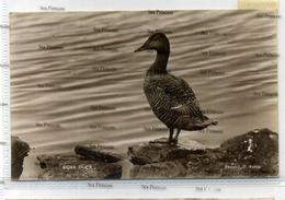 Shetland Postcard JD Rattar 1930s Eider Duck Used During War With Censor Marks FPO - Shetland