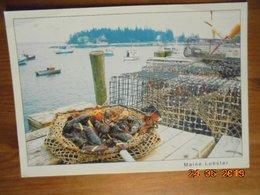 Lobster Ready For Market, Five Islands, Maine. Coastal Exposures 428 PM 2010 - Etats-Unis