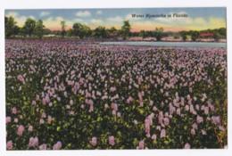 AK47 Water Hyacinths In Florida - Linen - United States
