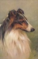 AS90 Animals - Dogs - Collie - Artist Signed Arthur Wardle - Dogs